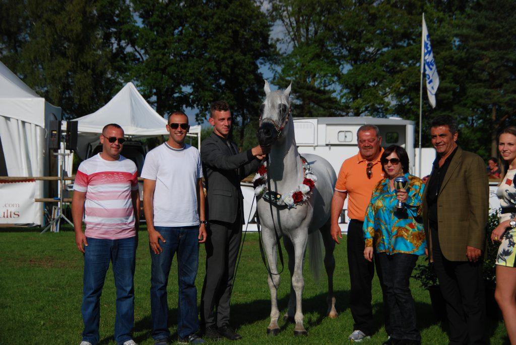 Razi al Khalediah champion arabian stallion