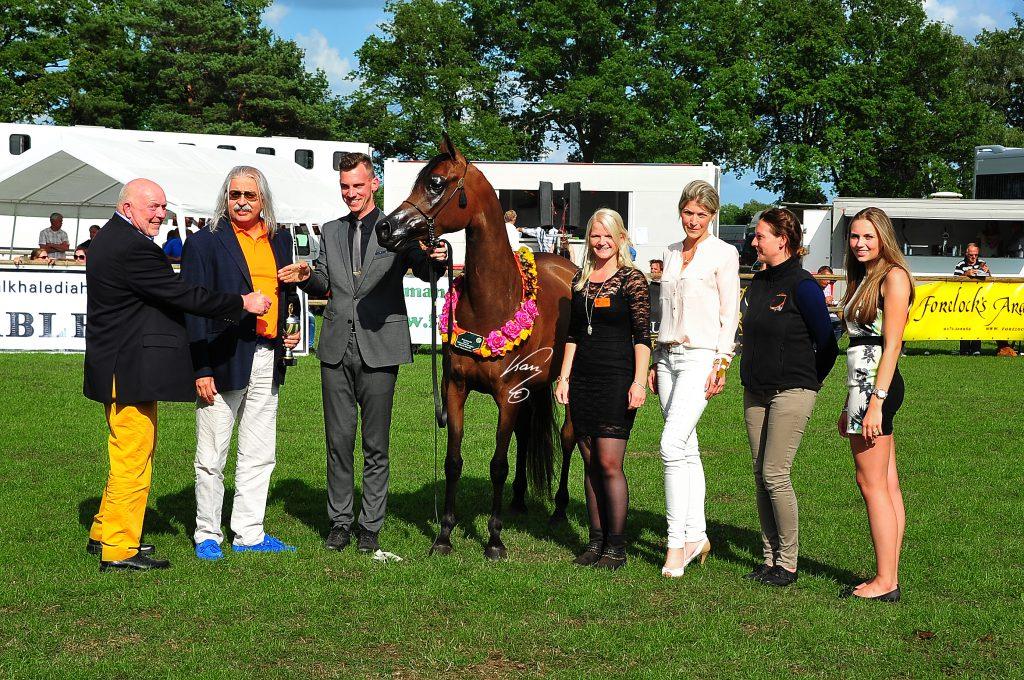 Bay-Munah W arabian champion mare