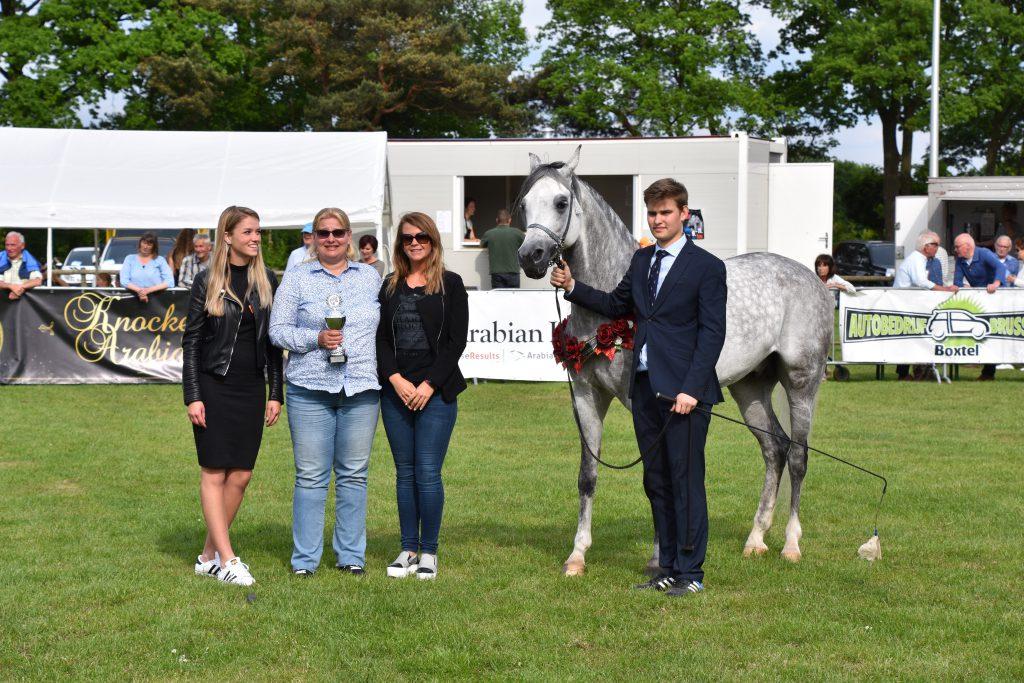 Postar Arabian gelding champion
