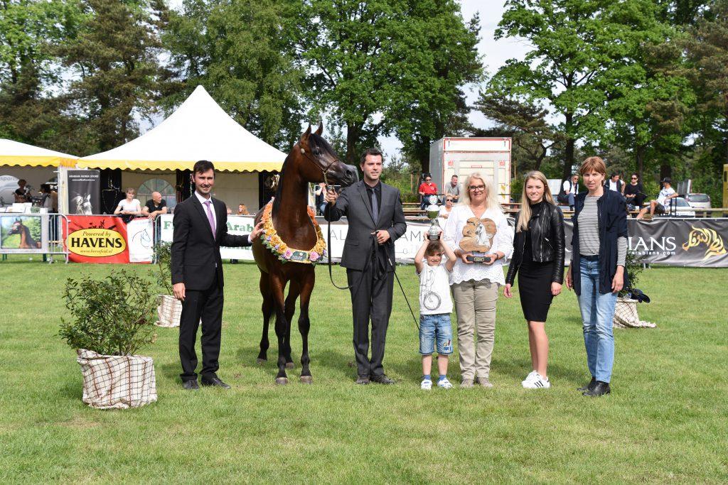 Gaudi J arabian medal winning colt