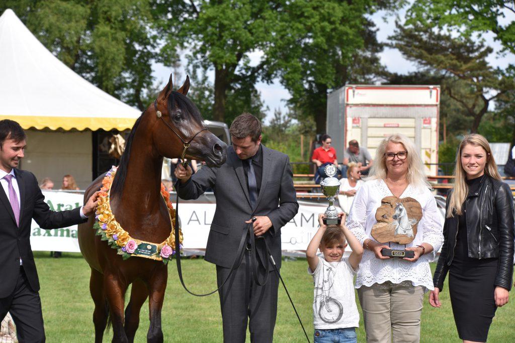 Gaudi J gold medal colt winner