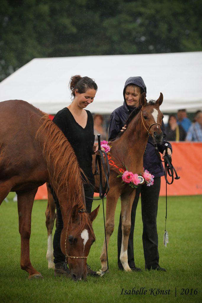Nafiesa Ajmala champion filly foal