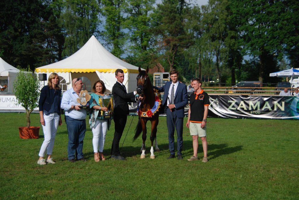 CBA Mattheus international champion colt