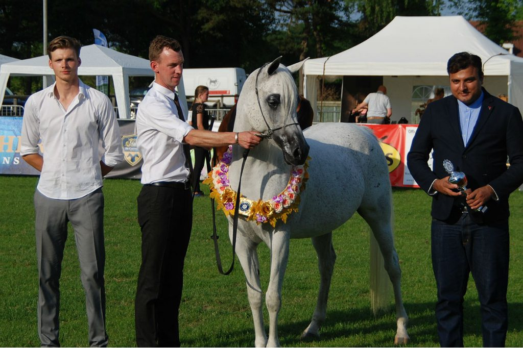 Nirah Meia Lua Arabian champion mare