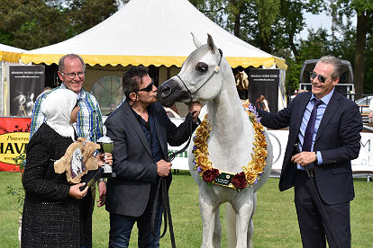 Meshael al Khalediah best of show white arabian mare being kissed on the face by her owner