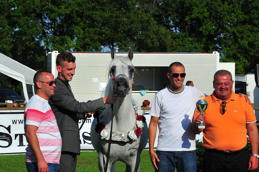 Mouheb silver champion arabian stallion at the arabian horse weekend