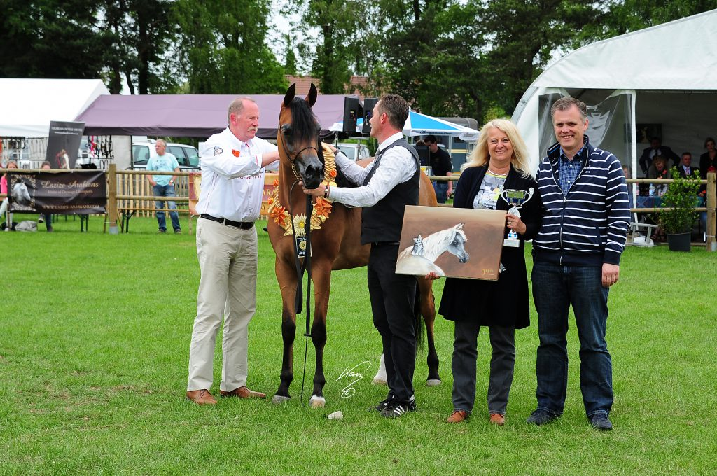 Mississippi J champion arabian mare