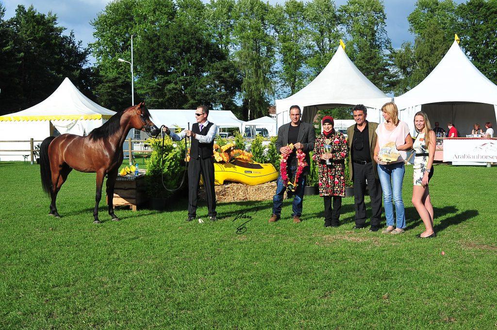 Razi al Khalediah champion arabian colt at the arabian horse weekend standing next to a dutch wooden clogg